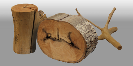 View Dr. Shigo's Wood Samples in 3d